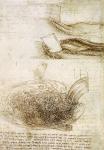 Leonardo da Vinci_14