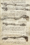 Leonardo da Vinci_2
