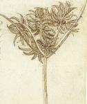 Leonardo da Vinci_34