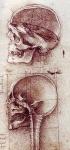 Leonardo da Vinci_41