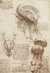 Leonardo da Vinci_8